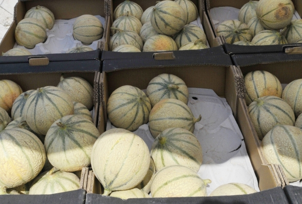 Melons-marché